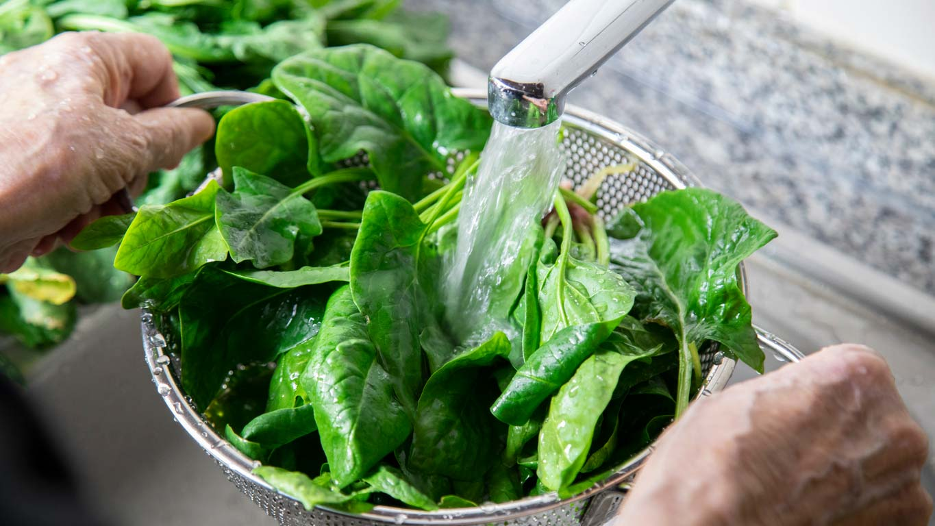 washing fresh spinach leaves in colander