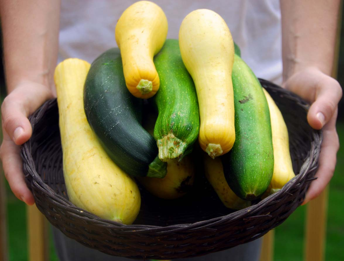 Basket of fresh summer squash