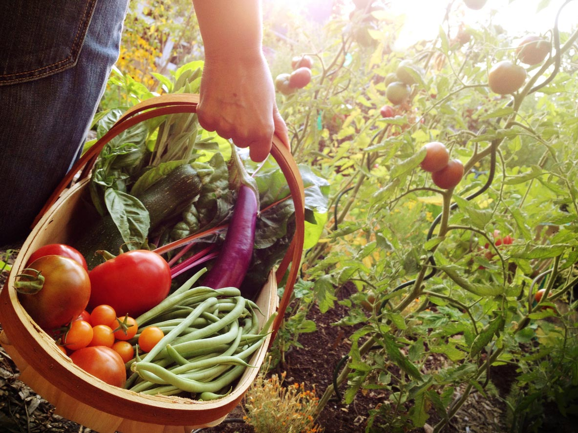 Woman holding basket of freshly picked vegetables