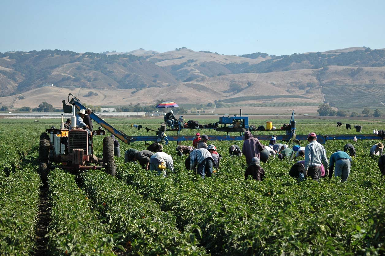 farm workers harvesting crop