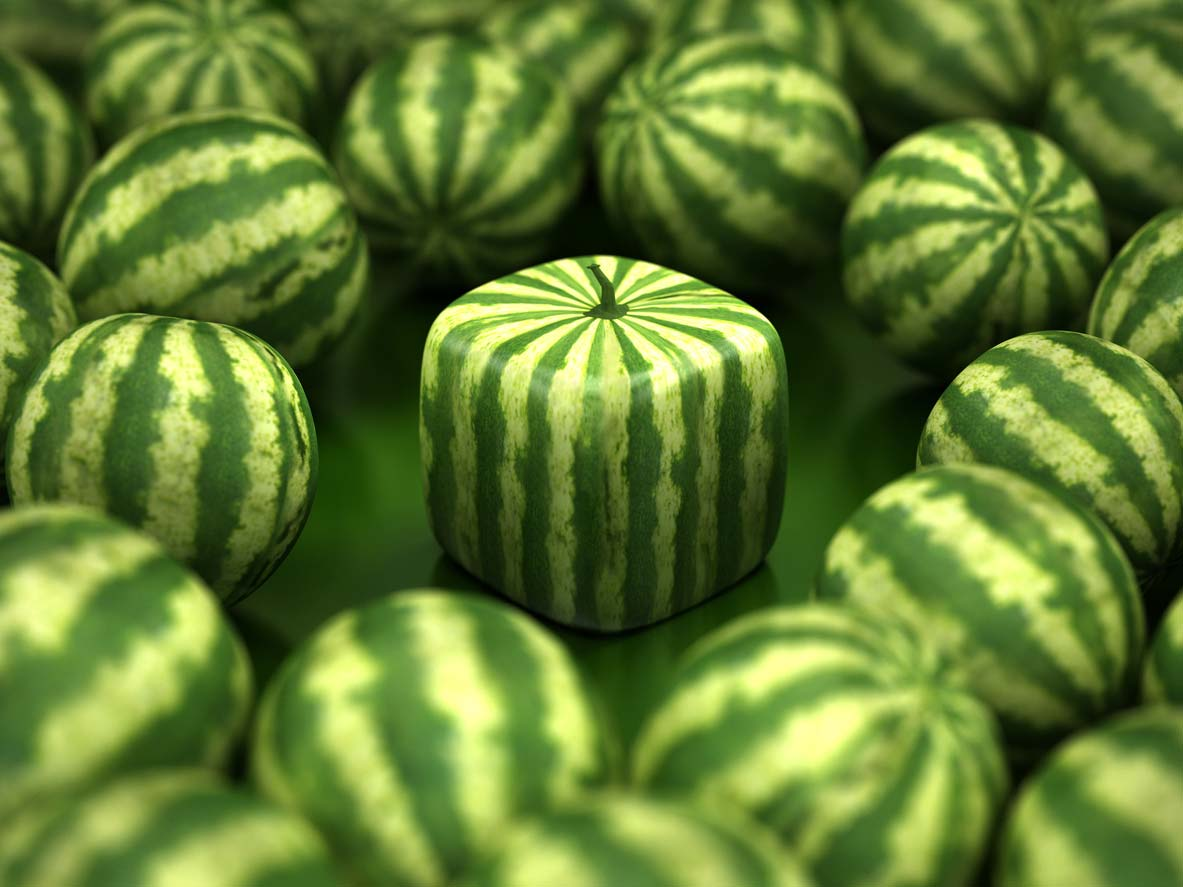 square watermelon amidst regular shaped ones