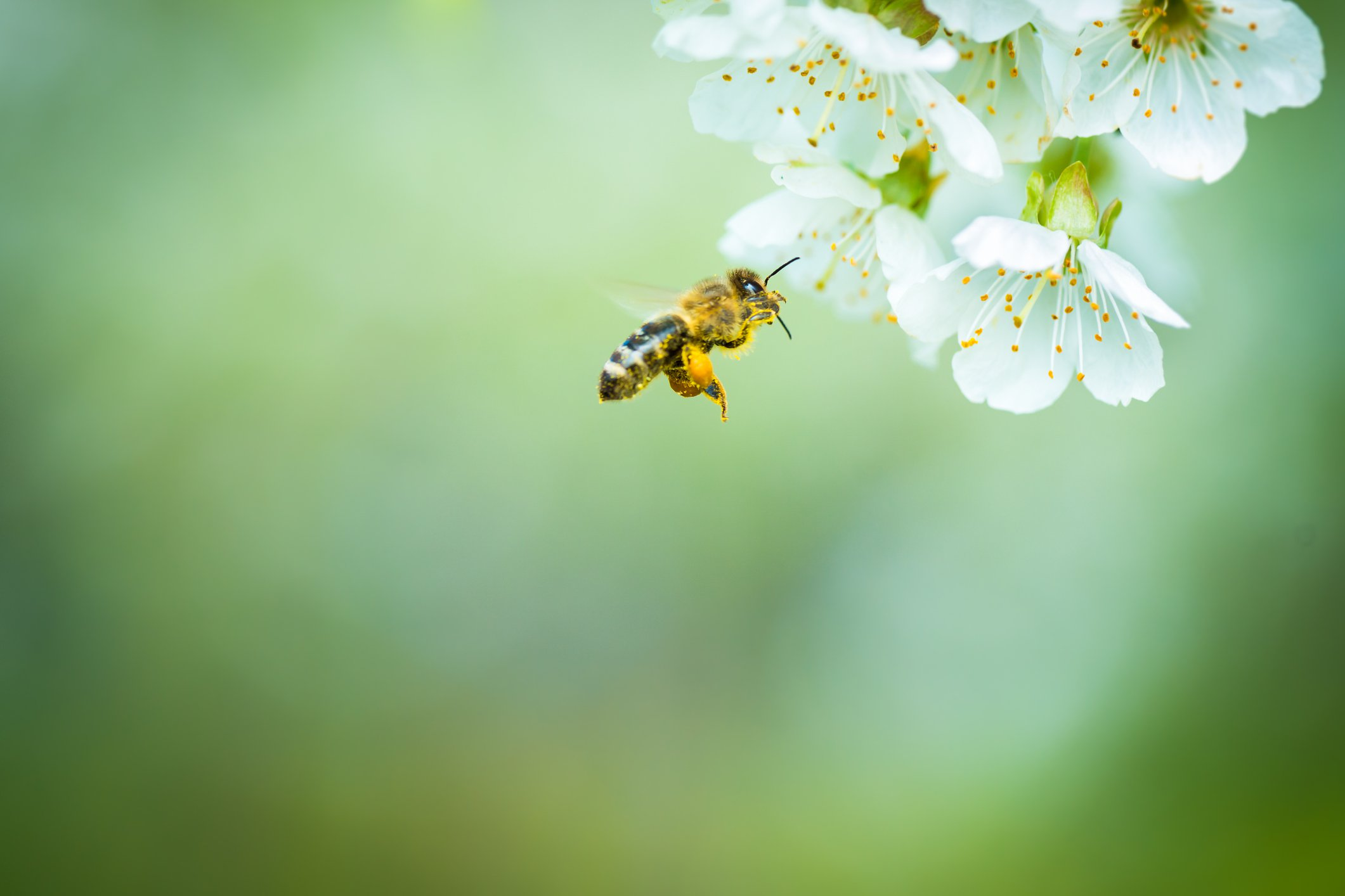 Bring Back the Bees: How to Plant a Bee-Friendly Garden