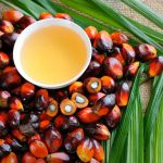 Palm fruits and oil