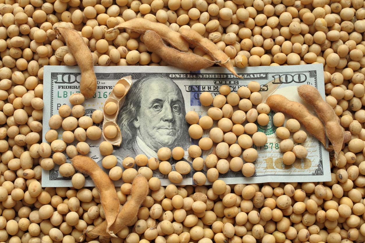 $100 bill in soybean pile