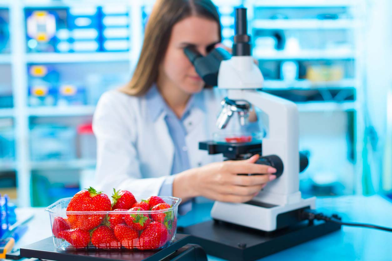 scientist looking at strawberries under microscope