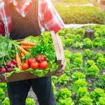 Farmer holding organic produce