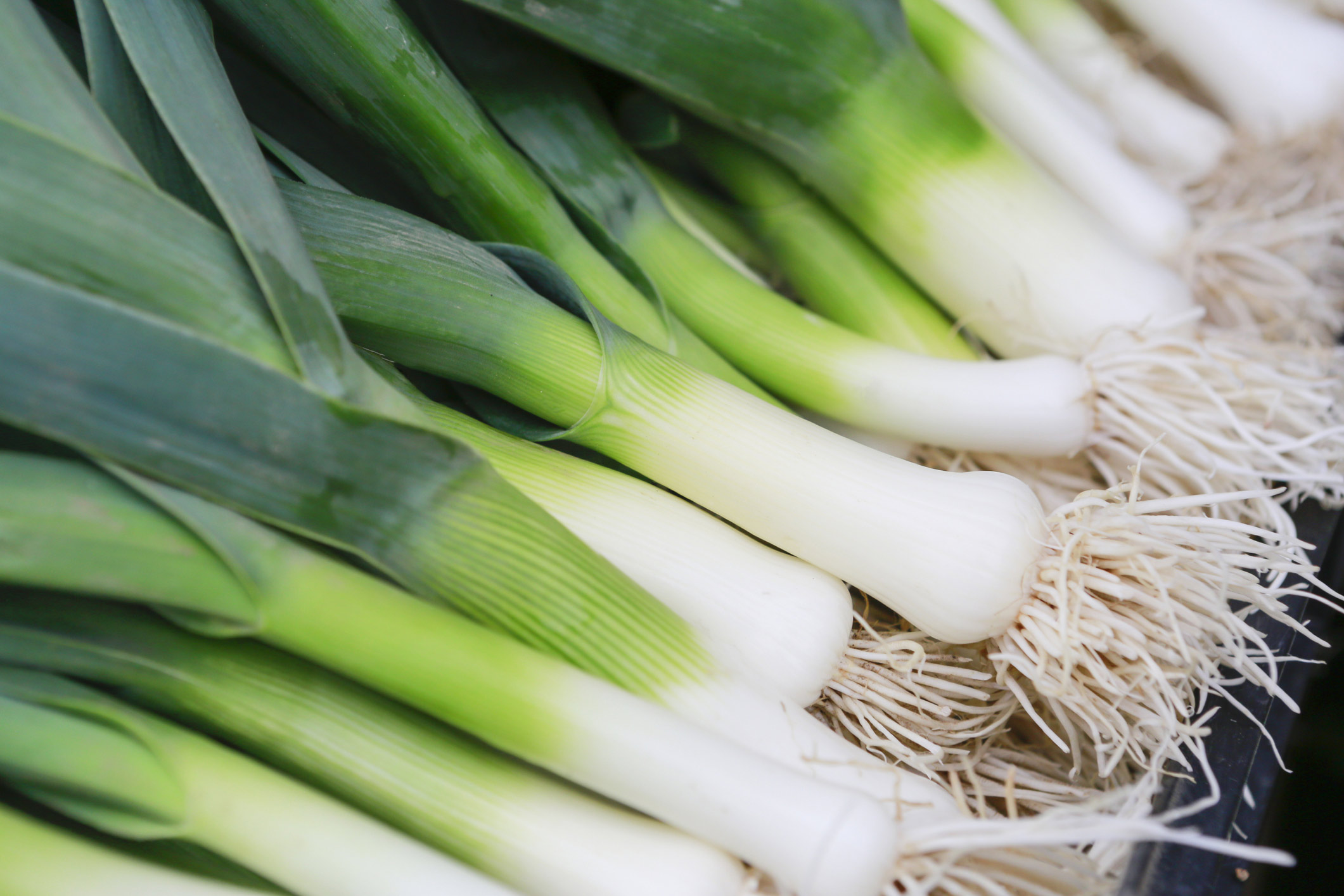 Allium vegetables: Scallions