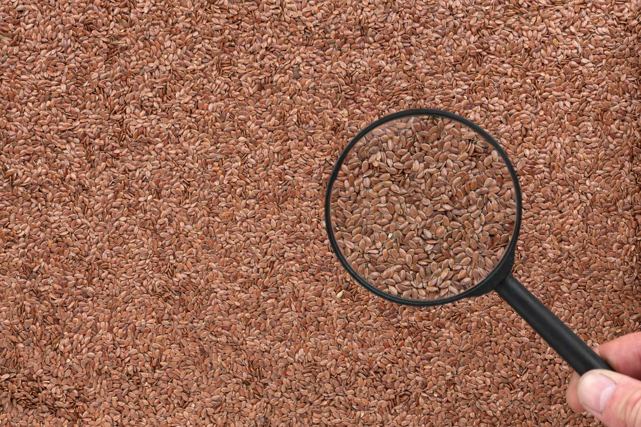 hand holding magnifying glass over surface covered in flaxseed
