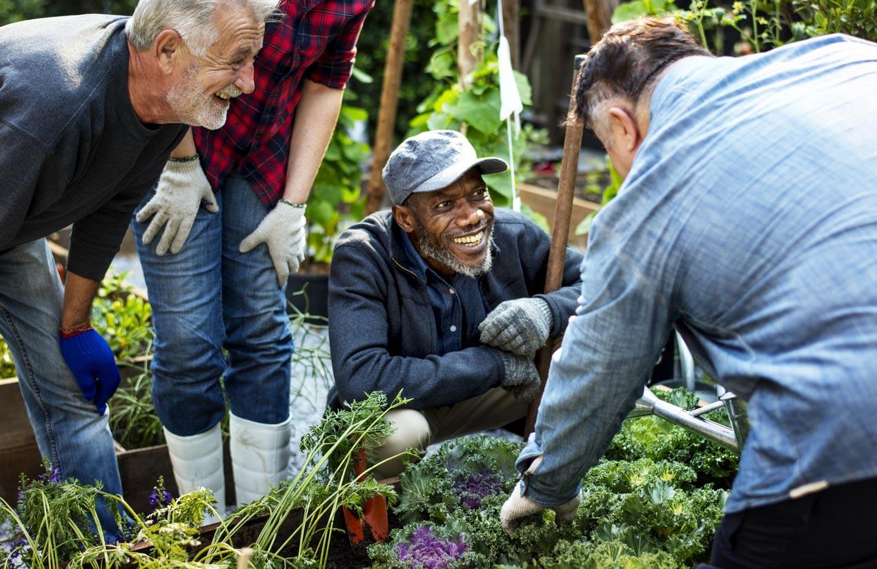 people planting vegetables in greenhouse