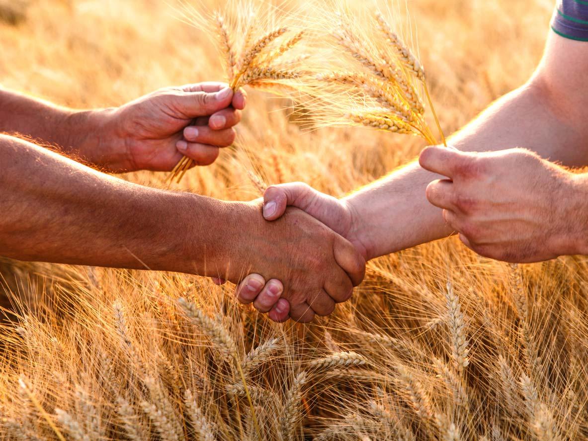Farmers handshake over wheat crop