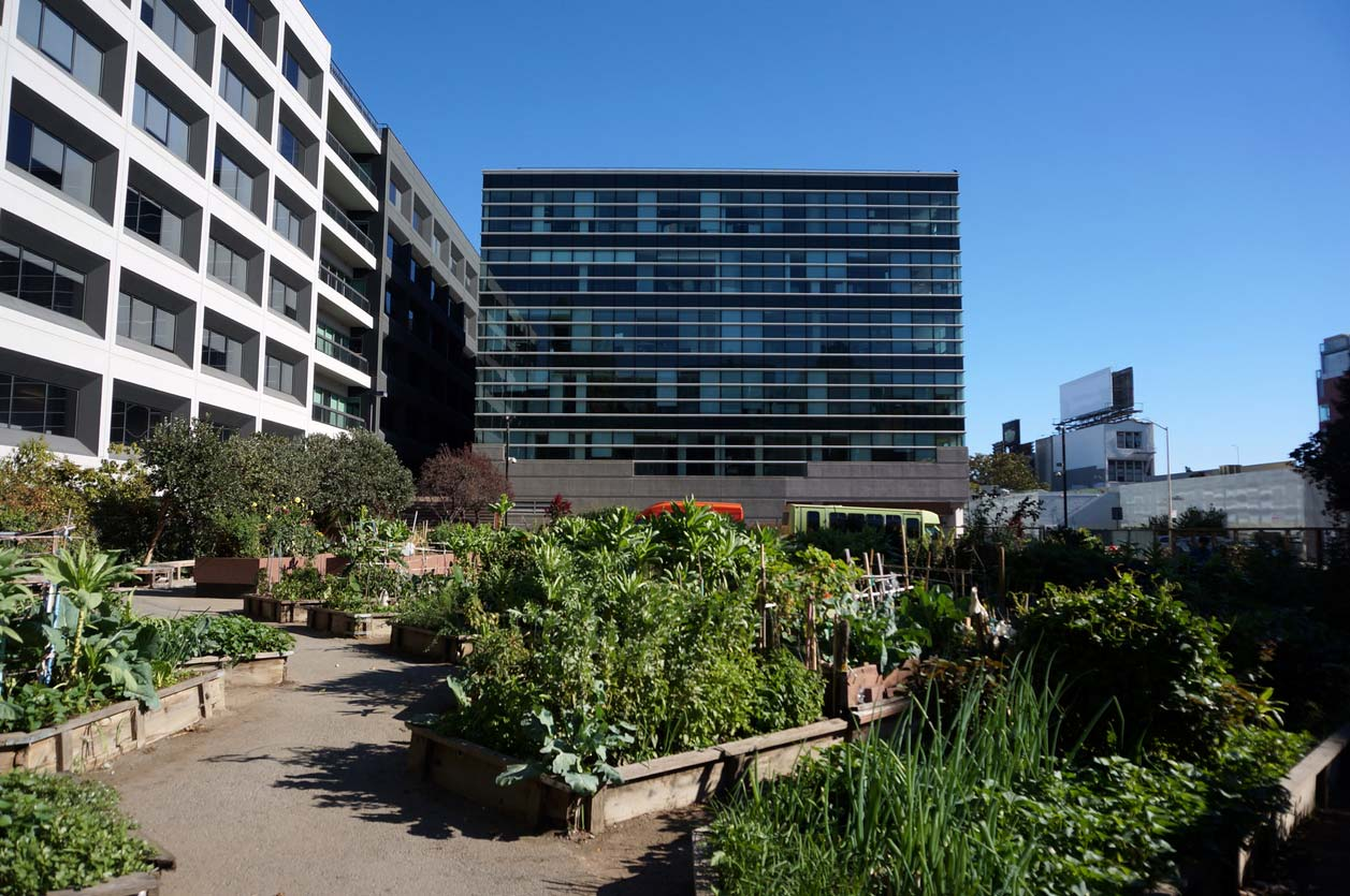 urban garden surrounded by buildings