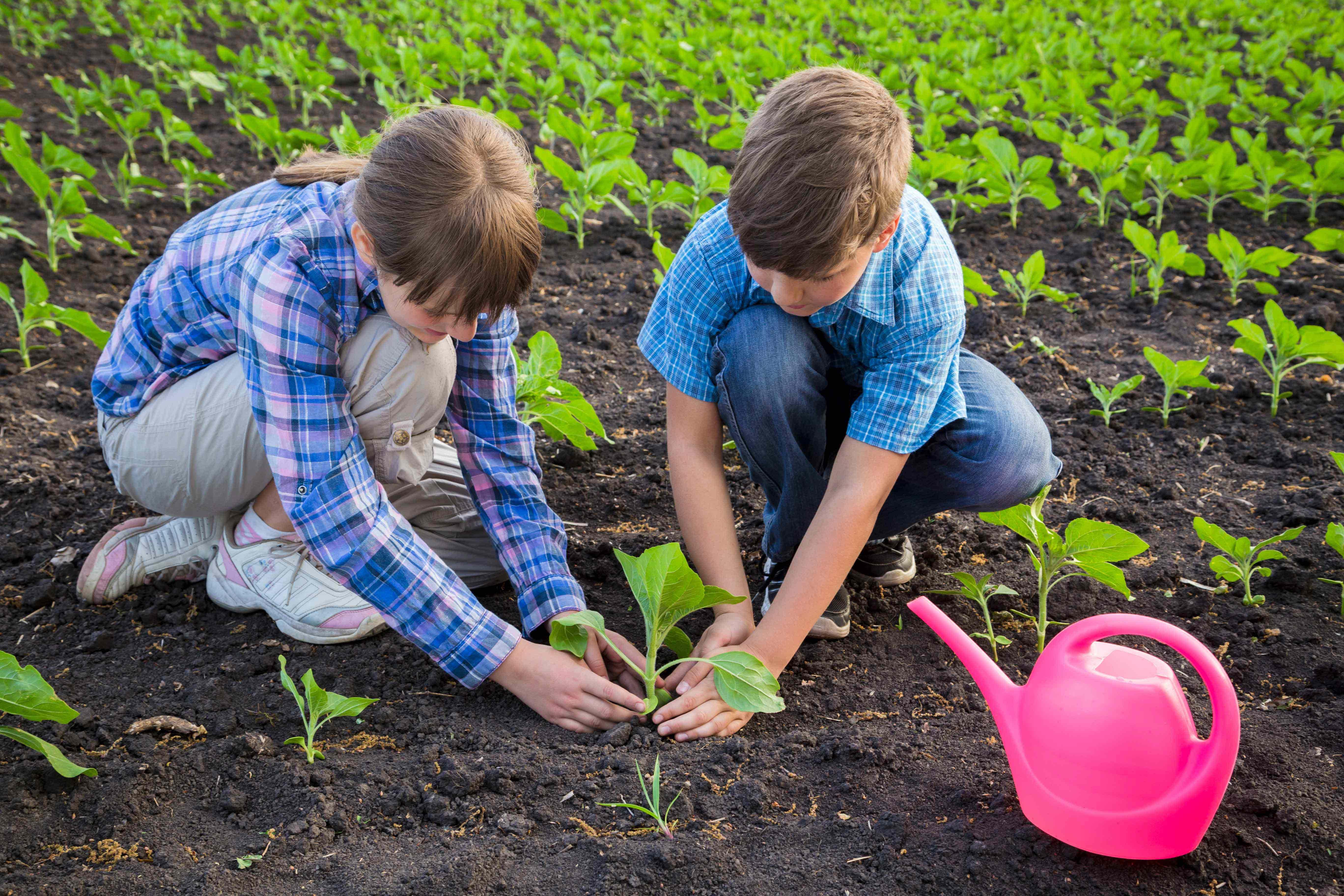 Kids planting seeds