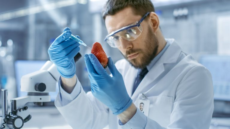 In a Modern Laboratory a Food Scientist Injects Strawberry with a Syringe.