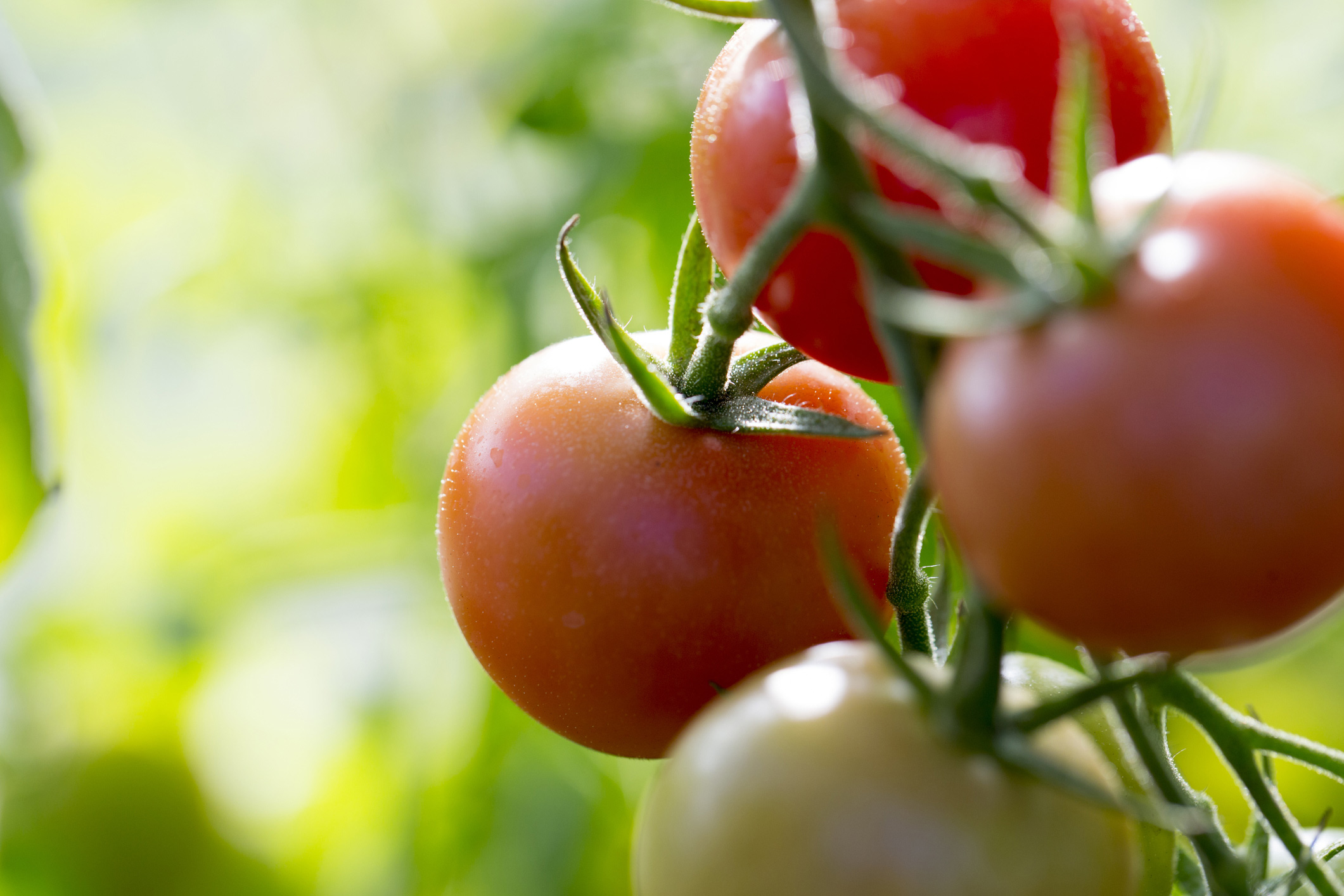 Top heart healthy foods: tomatoes