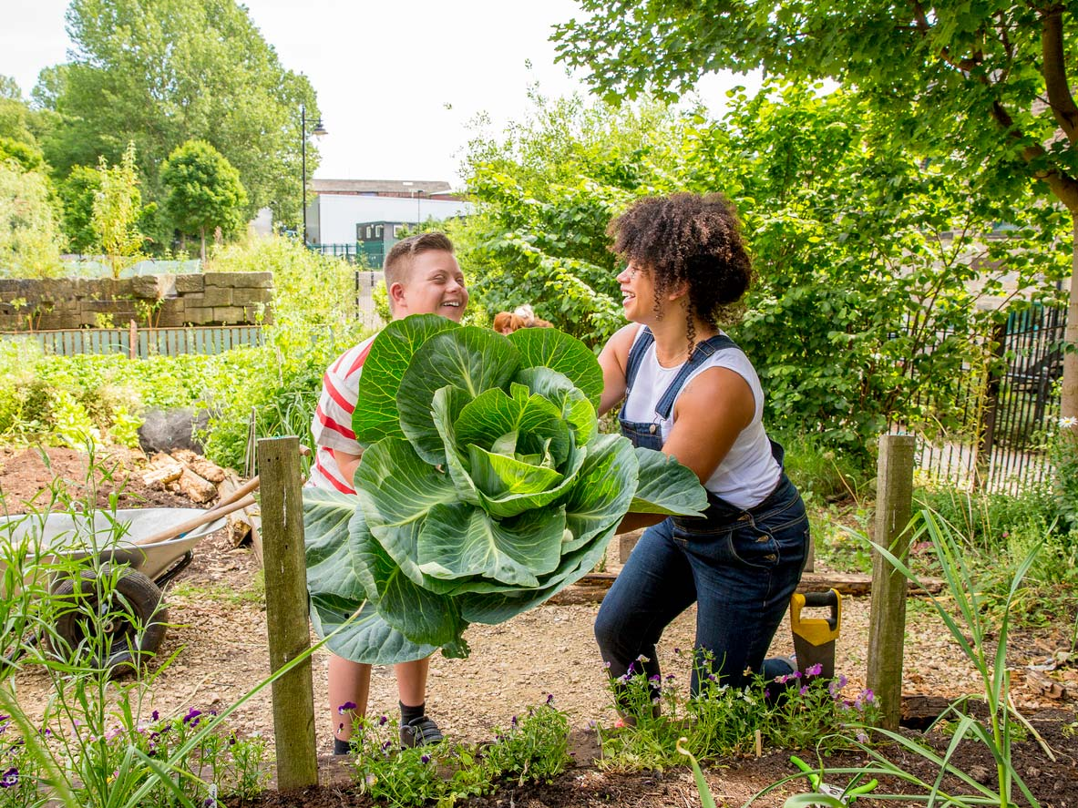 two people harvesting a giant bunch of greens from community garden