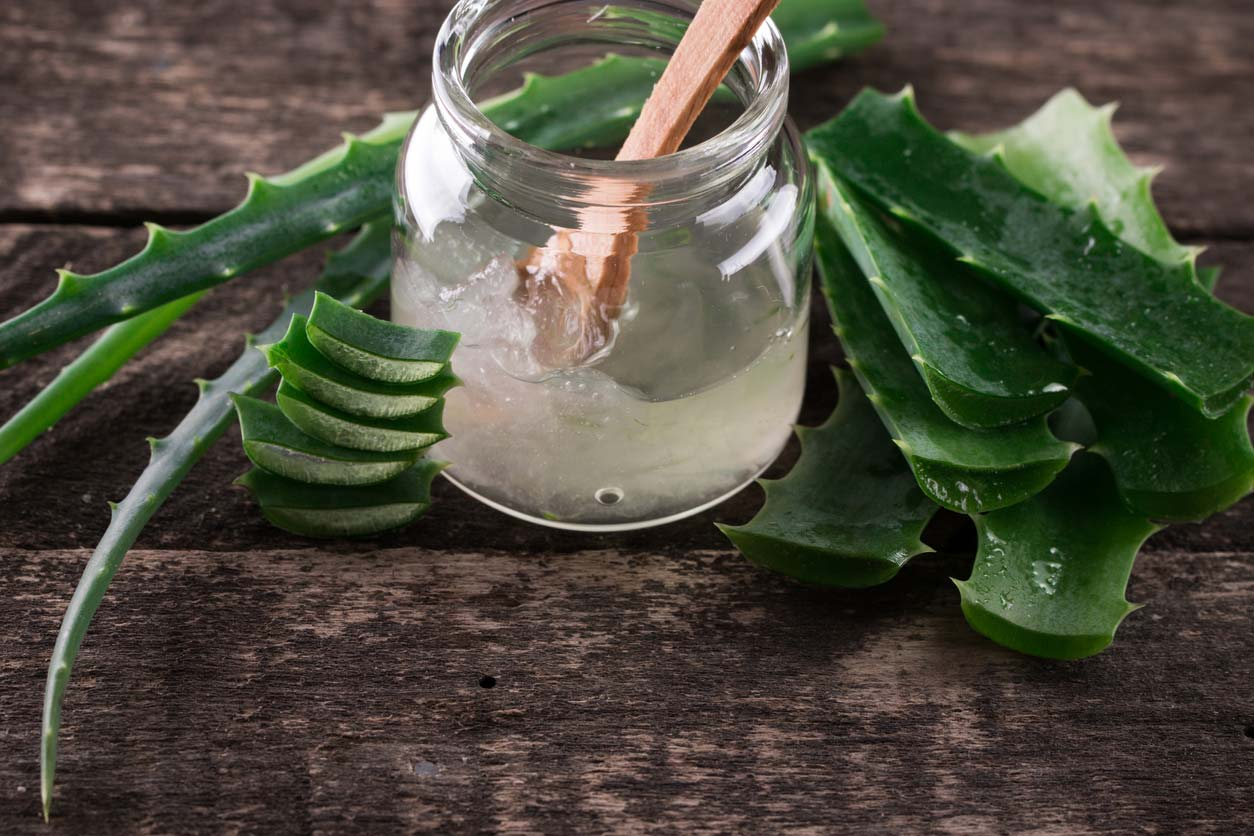 Aloe vera plant and gel in jar
