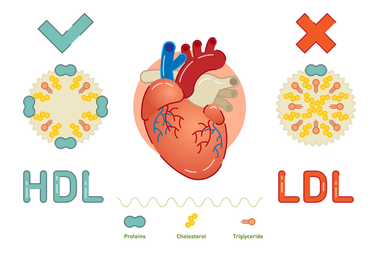 hdl and ldl cholesterol graphic
