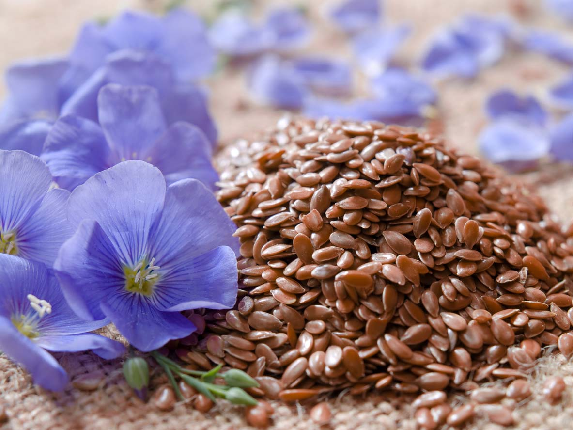 flaxseed in a pile with flax flowers