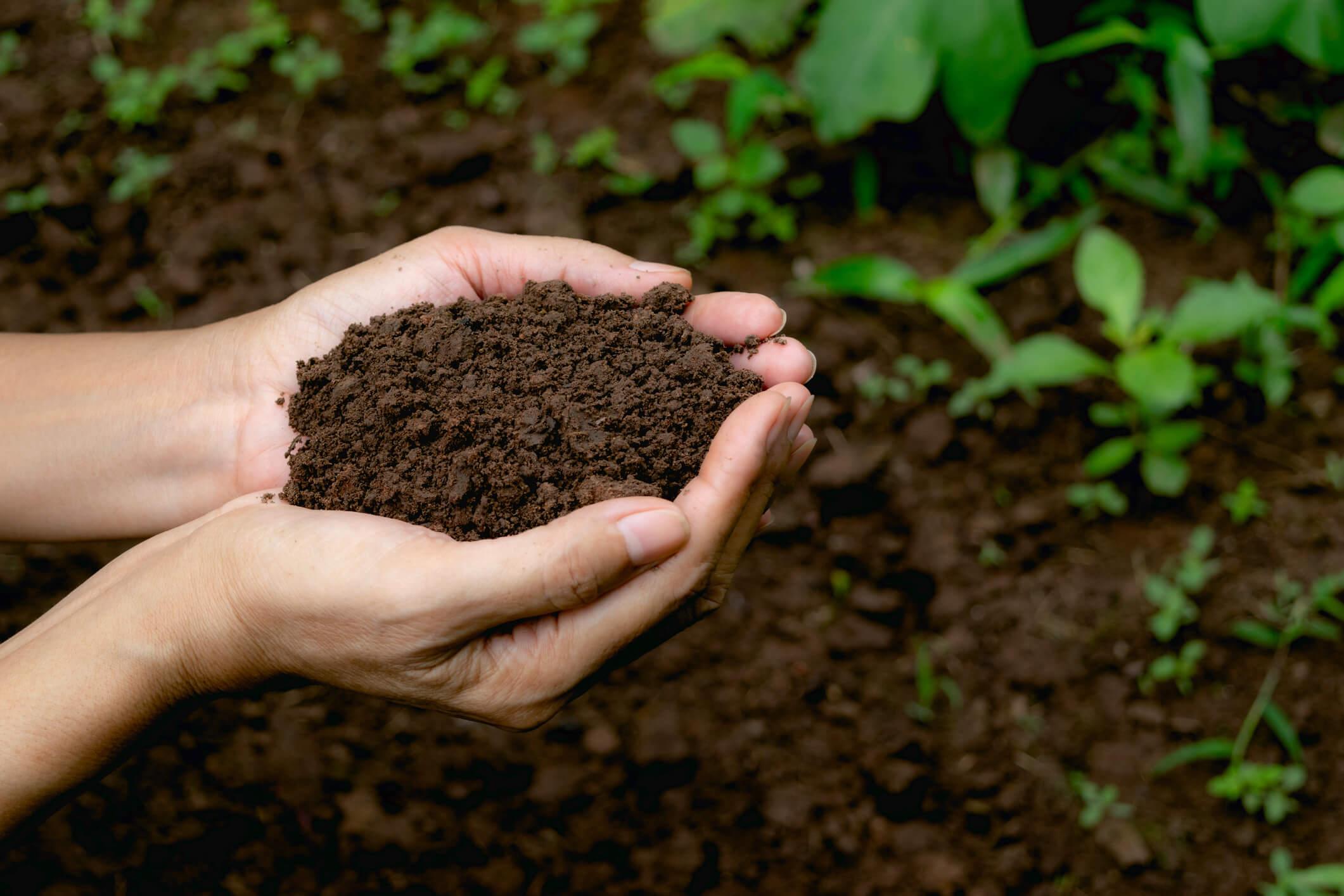 Hands holding fertile soil