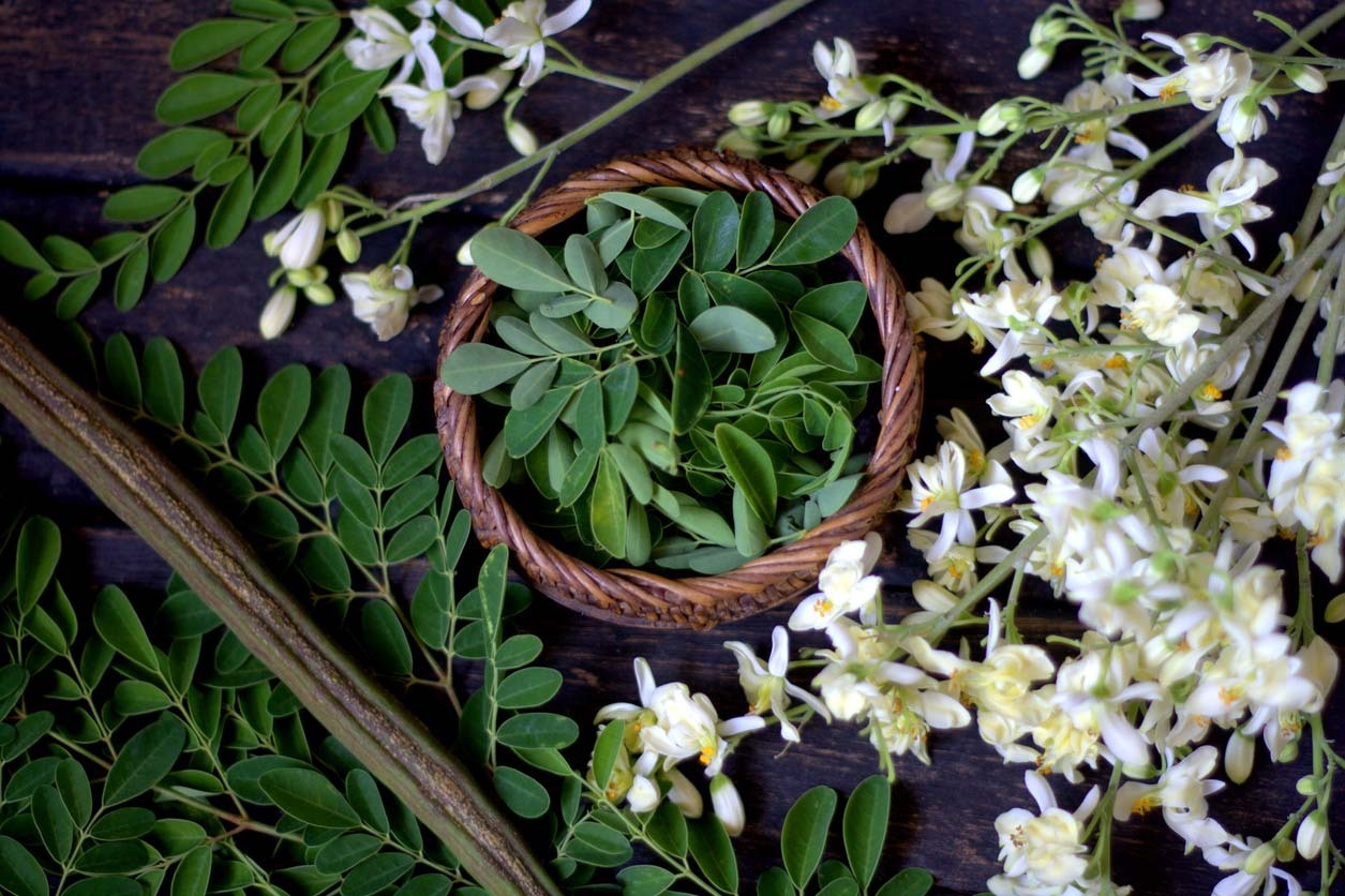 moringa leaves and flowers on table