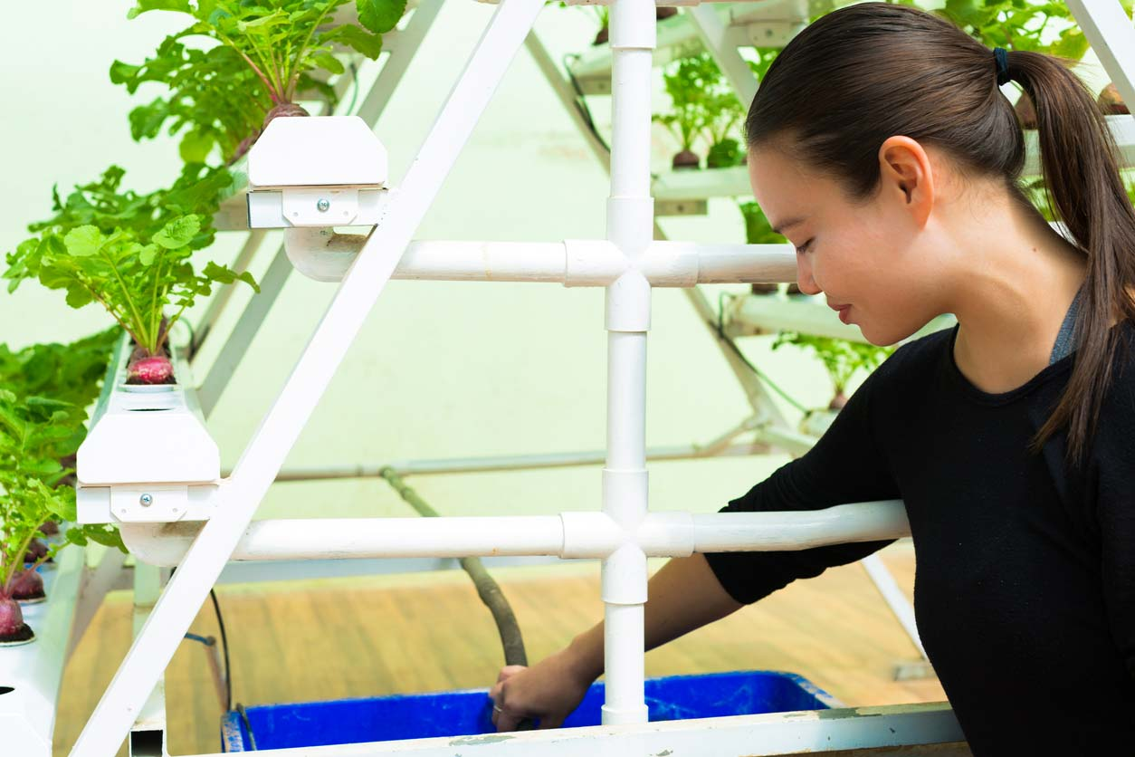 farmer taking care of her hydroponic garden set up in green house