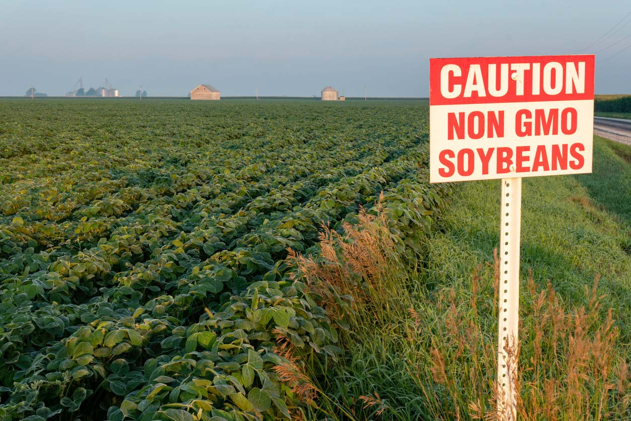 field with caution non gmo soybean sign