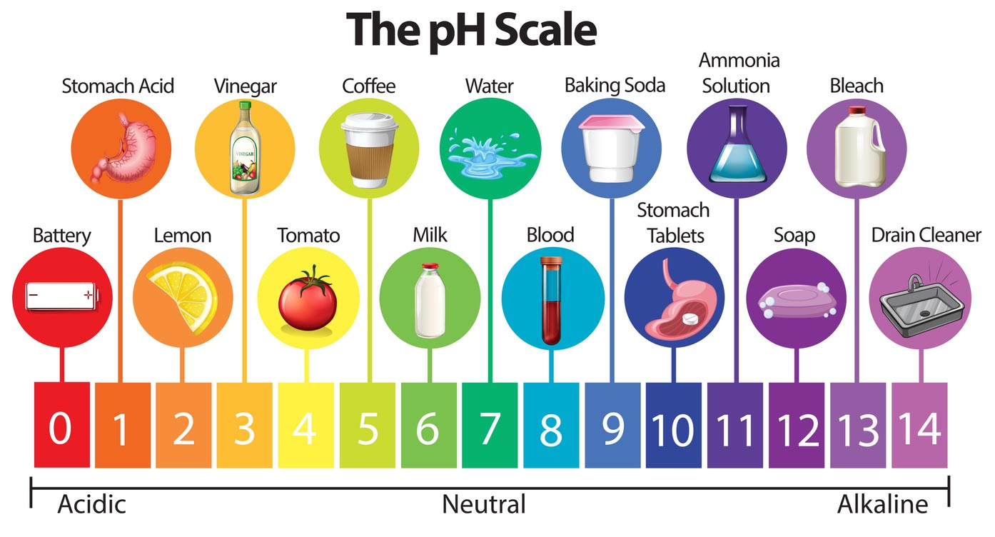 phScale of foods