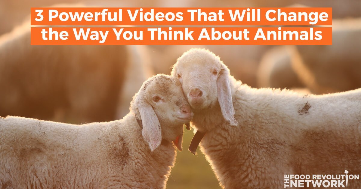 3 Powerful Videos That Will Change the Way You Think About Animals
