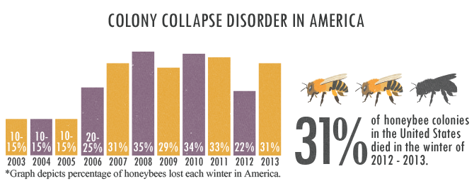 Colony Collapse Disorder in America