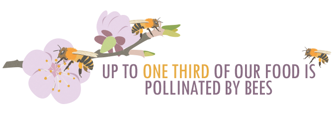 Up to One-Third of Our Food is Pollinated By Bees