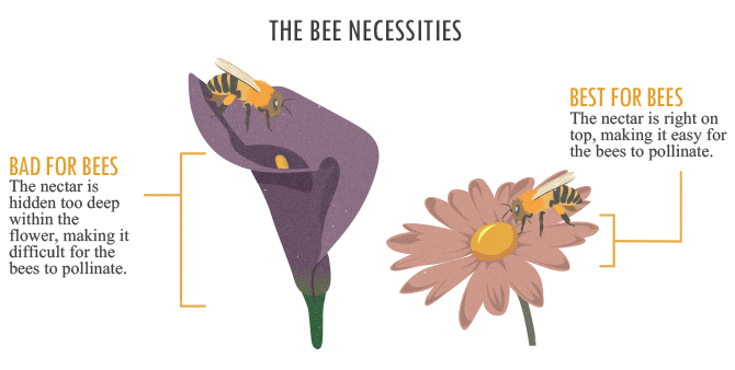 The Bee Necessities