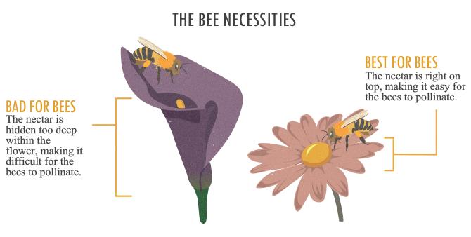 The Bee Necessities