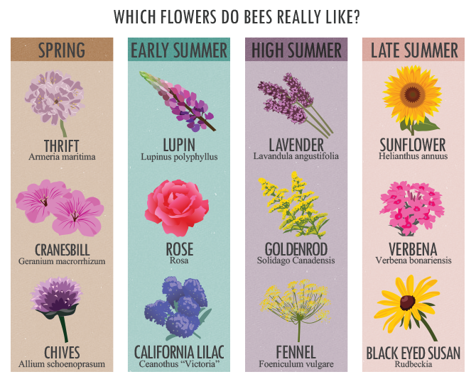 Which Flowers Do Bees Really Like?