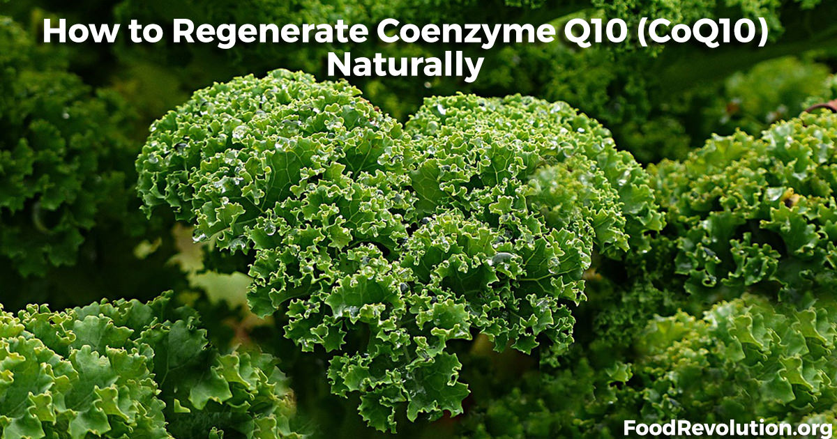 How to regenerate coenzyme Q10