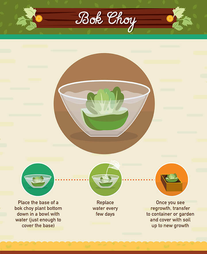 16 Foods That Ll Re Grow From Kitchen Scraps: Regrow Food Scraps: 19 Vegetables You Can Grow