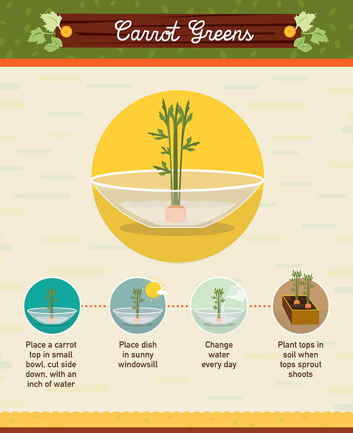 You can grow your own carrot greens