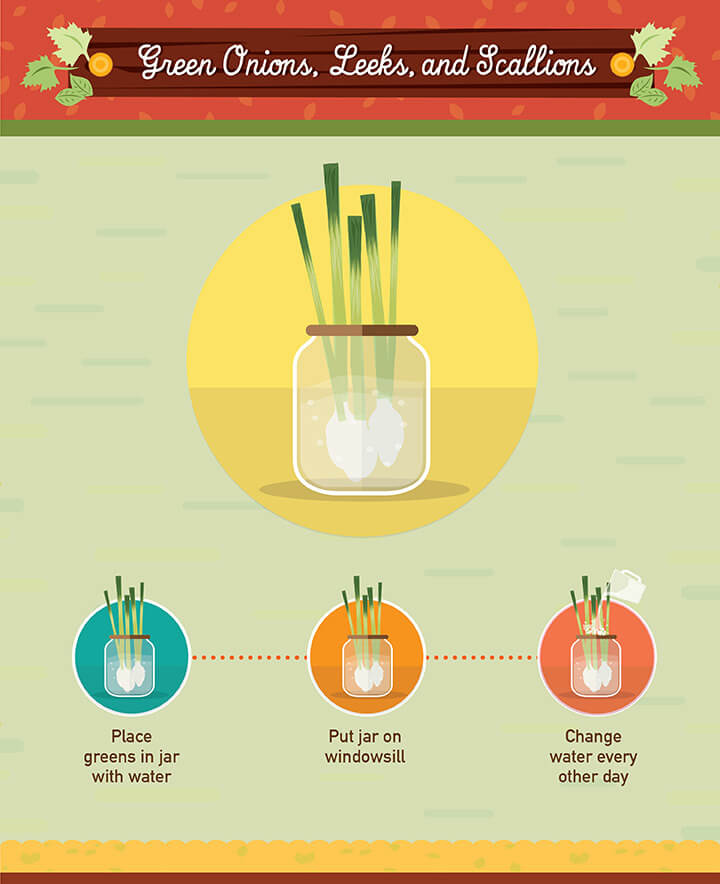 How to grow onion from scraps