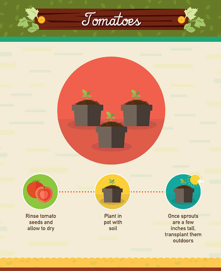 regrow food scraps tomatoes