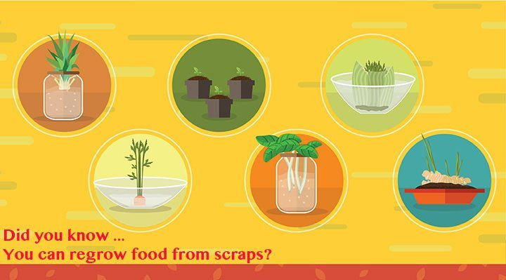 Regrow Food Scraps 19 Vegetables You Can Grow