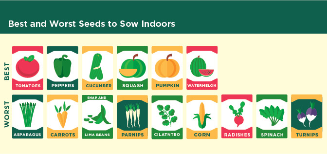 Best and worst seeds to sow indoors