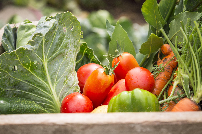 Organic Food Revolution
