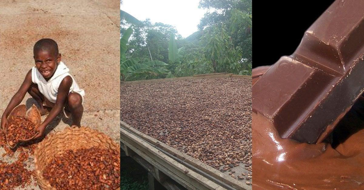 slavery-chocolate