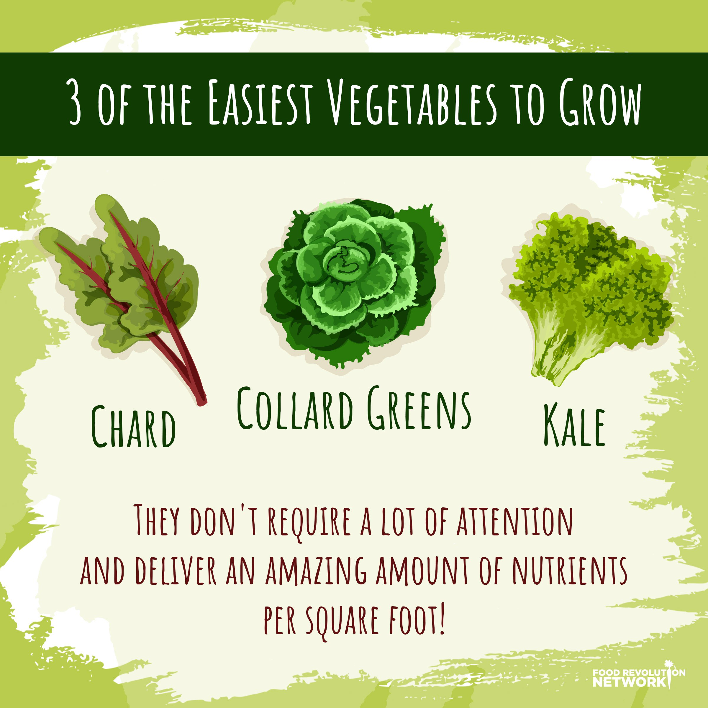 3 easiest vegetables to grow infographic