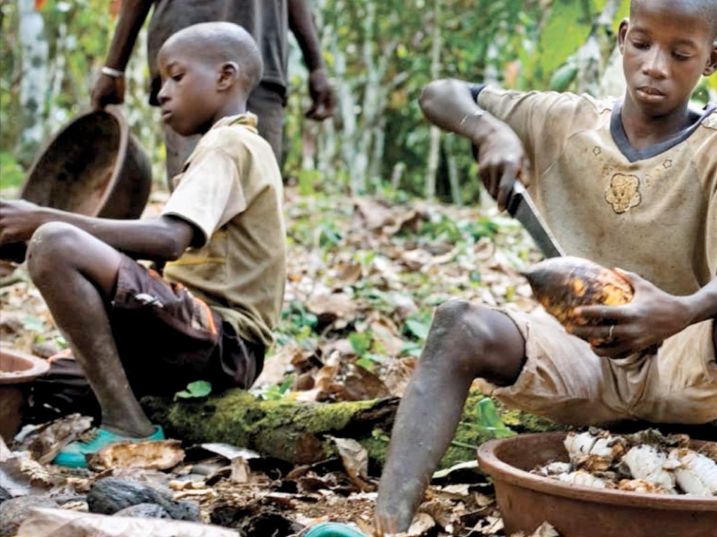 young children cutting cocoa seeds