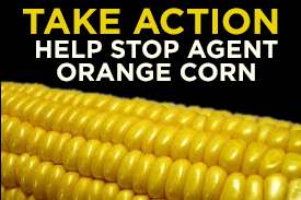 take-action-corn