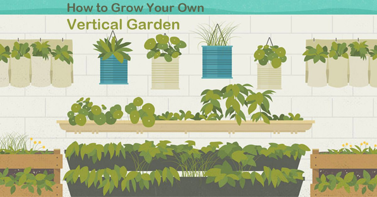 Infographic How To Grow A Vertical Garden